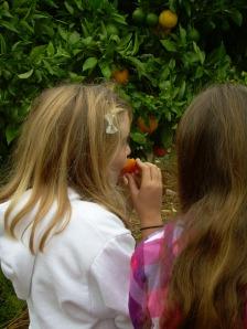 Valencia Oranges Yumm!